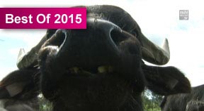 Hoppalas Teil 1 2015