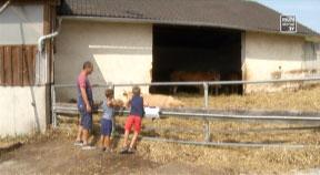 Hoffest beim Baiernaz in Summerau