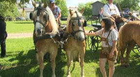 Pferdefest in Rainbach