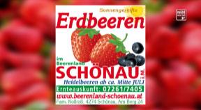 Ankündigung Erdbeerland Kollroß in Schönau im Mühlkreis