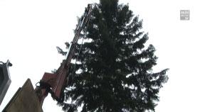 Linzer Christbaum kommt aus Grünbach