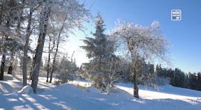Winter im Mühlviertel