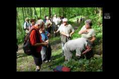 Bezirkswandertag des Seniorenbundes Urfahr-Umgebung in Gramastetten